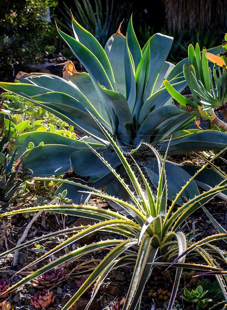 加州最爱的花园之一---露丝.班克罗夫花园_图1-5