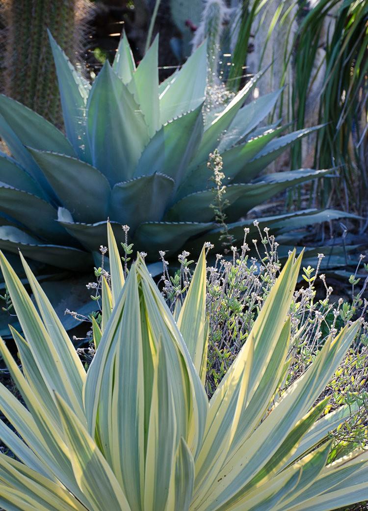 加州最爱的花园之一---露丝.班克罗夫花园_图1-6