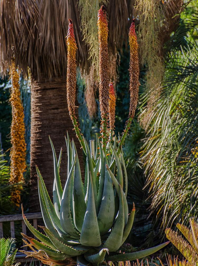 加州最爱的花园之一---露丝.班克罗夫花园_图1-9