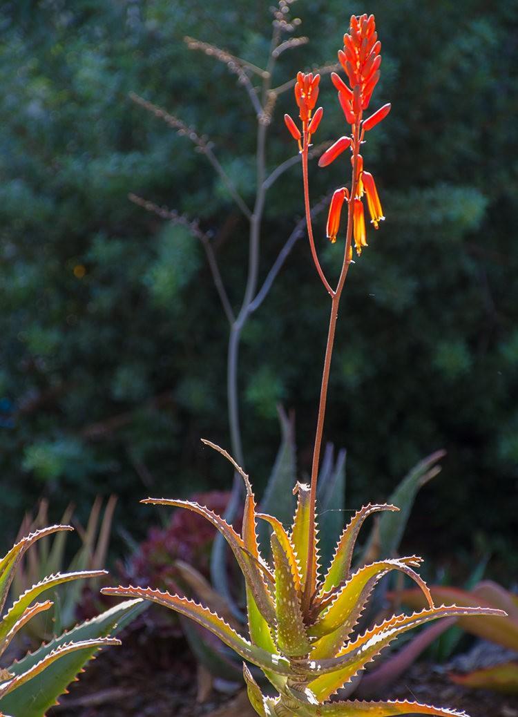 加州最爱的花园之一---露丝.班克罗夫花园_图1-10