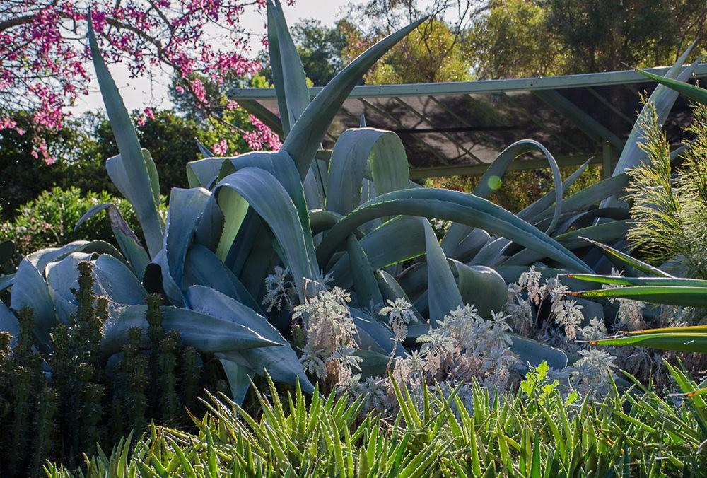 加州最爱的花园之一---露丝.班克罗夫花园_图1-13