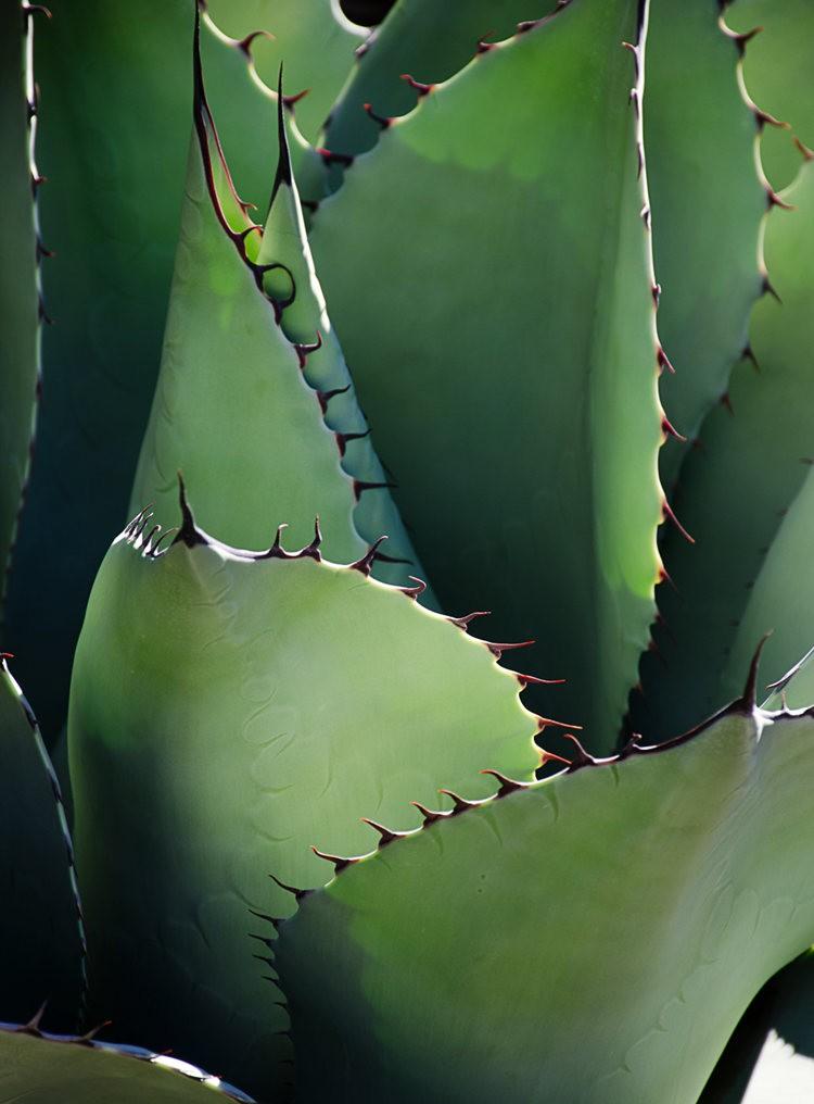 加州最爱的花园之一---露丝.班克罗夫花园_图1-14
