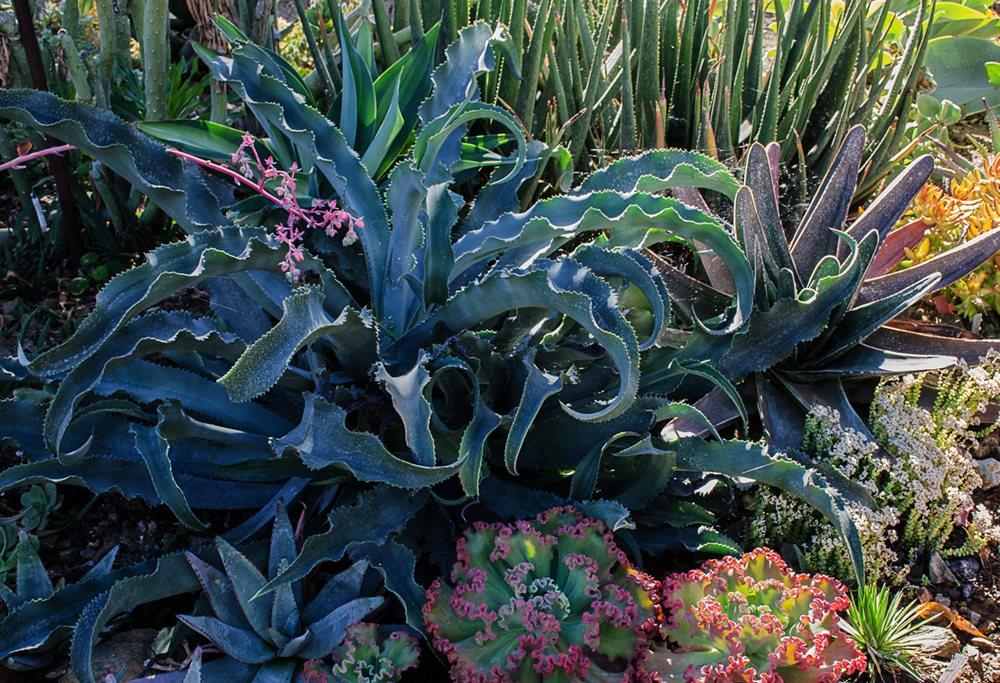 加州最爱的花园之一---露丝.班克罗夫花园_图1-15