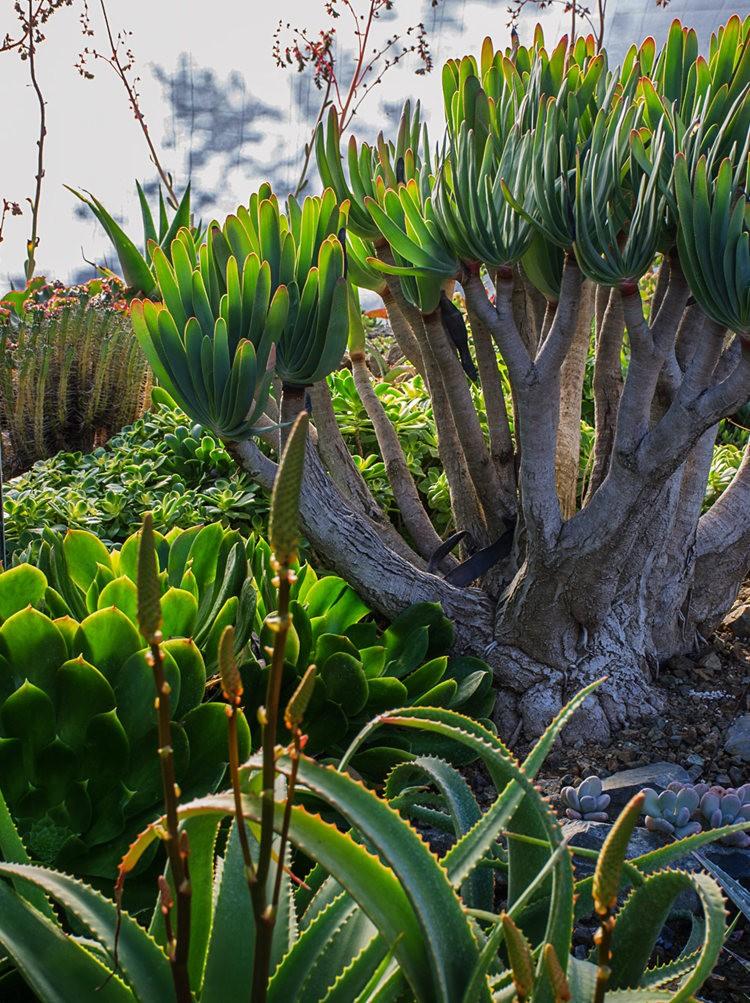 加州最爱的花园之一---露丝.班克罗夫花园_图1-17
