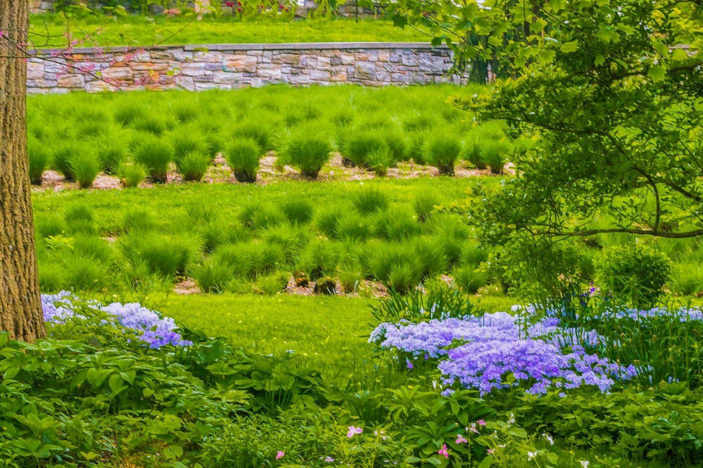 Chanticleer花园,春风得意_图1-2