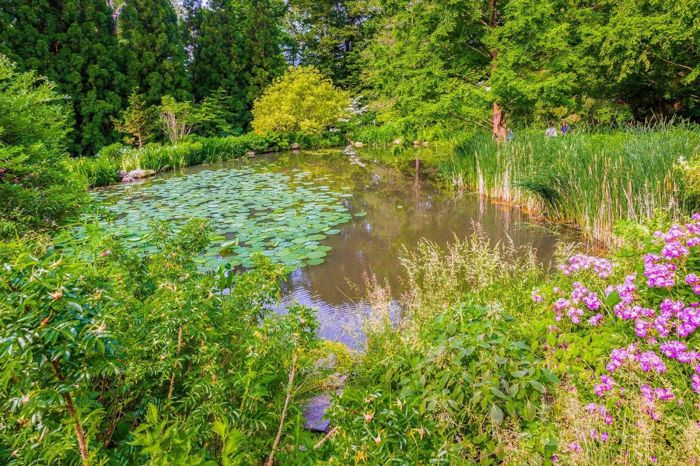 Chanticleer花园,春风得意_图1-17