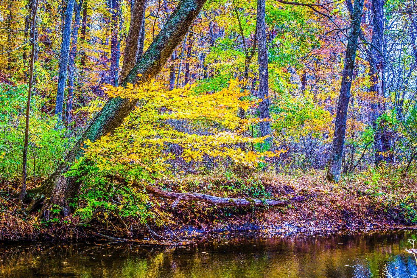 宾州雷德利克里克公园(Ridley creek park),大自然的舞台_图1-1