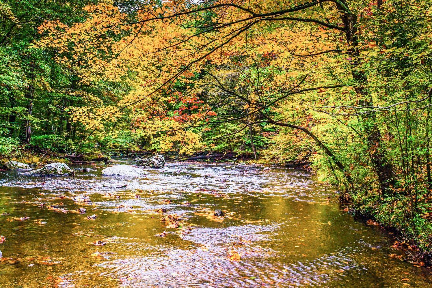 宾州雷德利克里克公园(Ridley creek park),大自然的舞台_图1-2