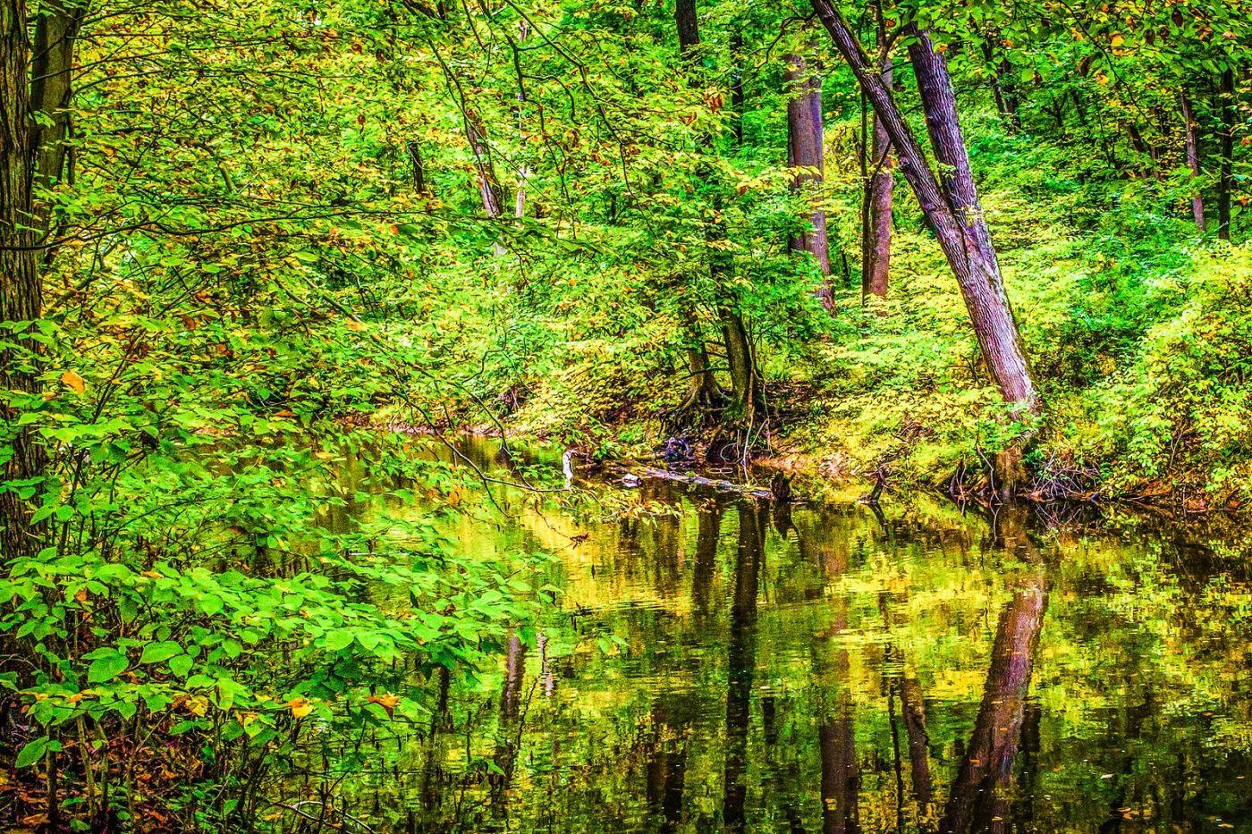 宾州雷德利克里克公园(Ridley creek park),大自然的舞台_图1-3