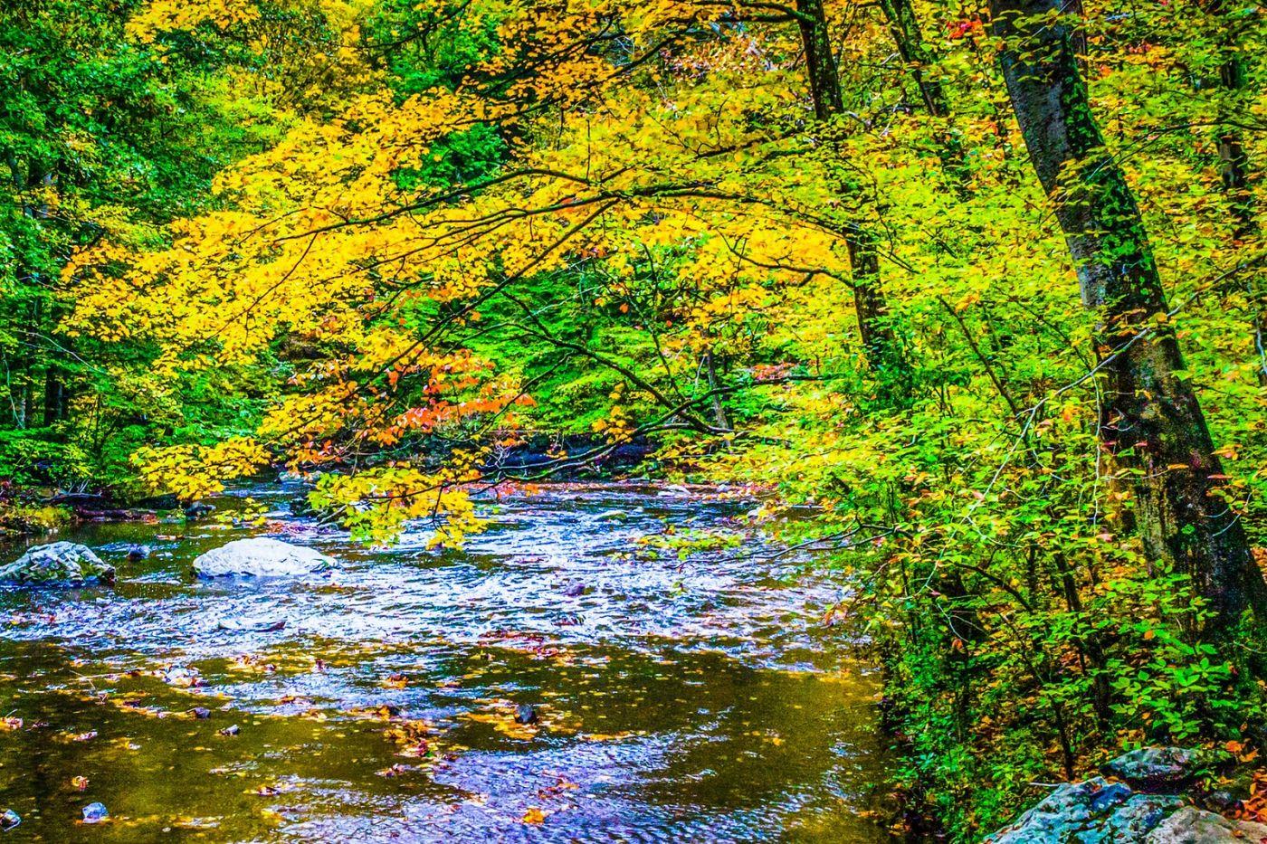 宾州雷德利克里克公园(Ridley creek park),大自然的舞台_图1-4