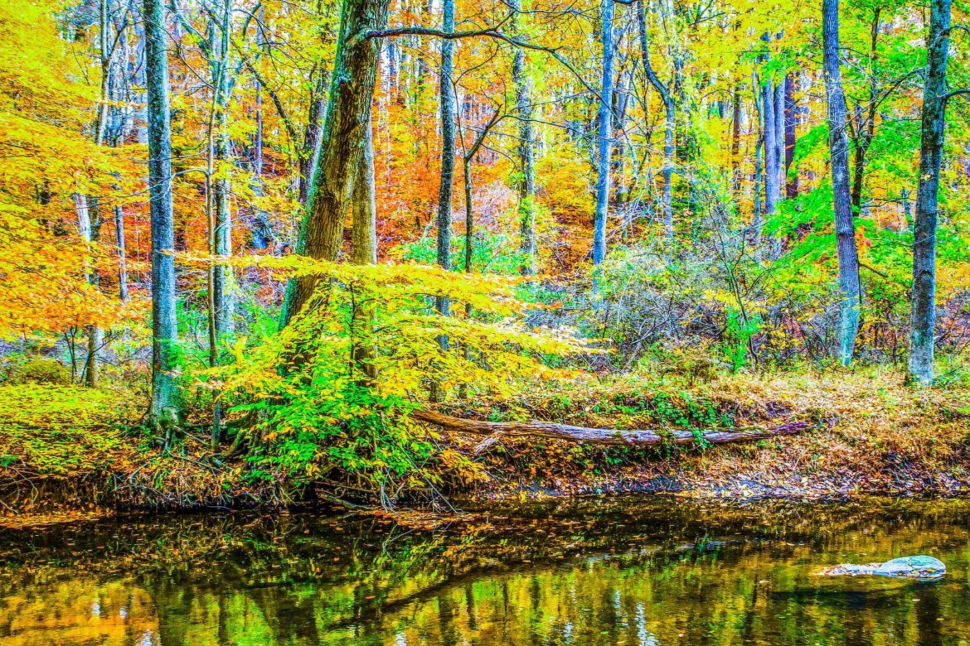 宾州雷德利克里克公园(Ridley creek park),大自然的舞台_图1-8