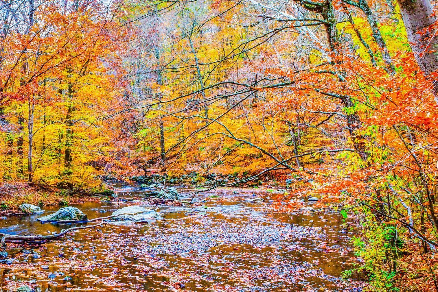 宾州雷德利克里克公园(Ridley creek park),大自然的舞台_图1-5