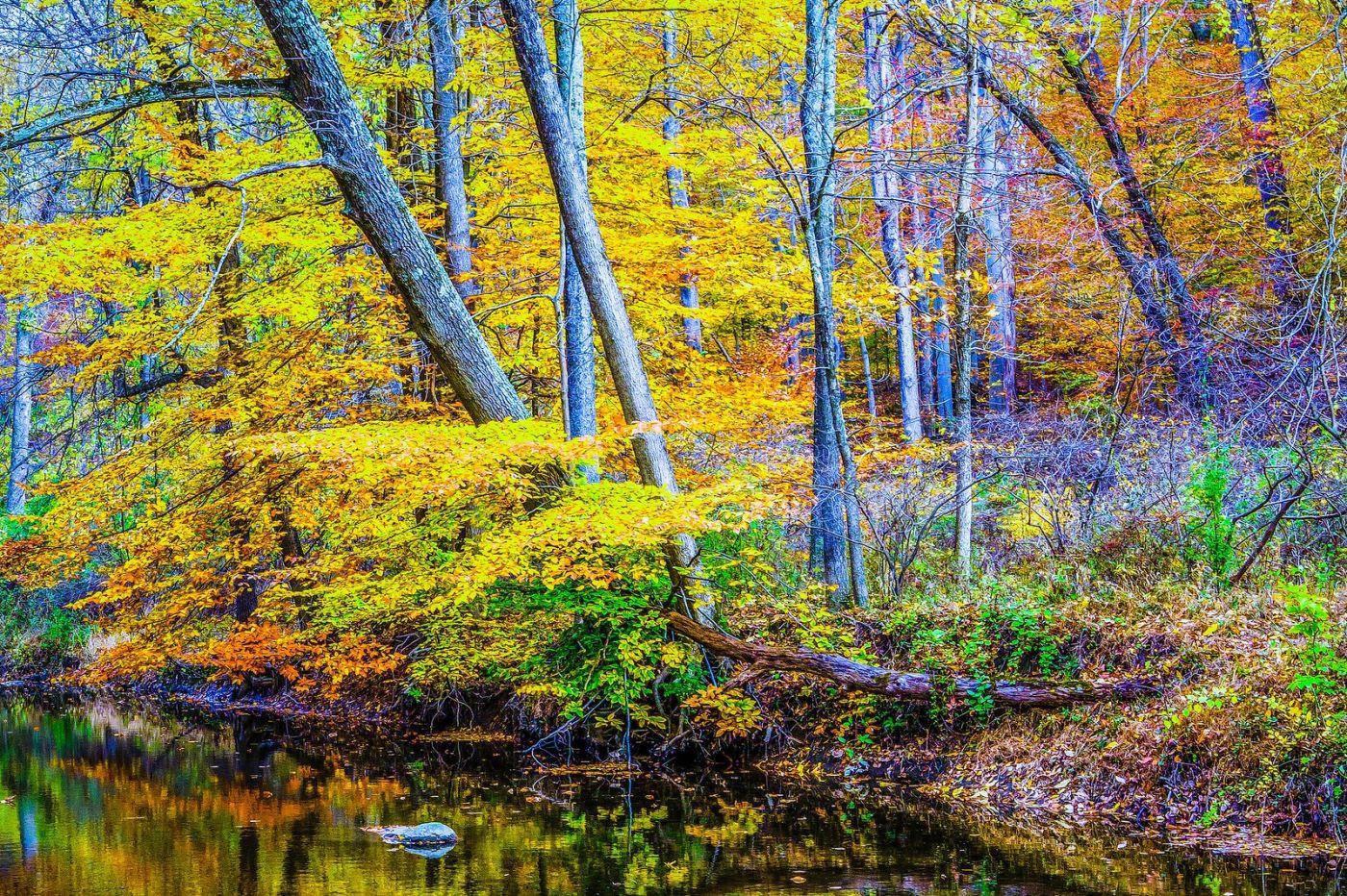 宾州雷德利克里克公园(Ridley creek park),大自然的舞台_图1-9