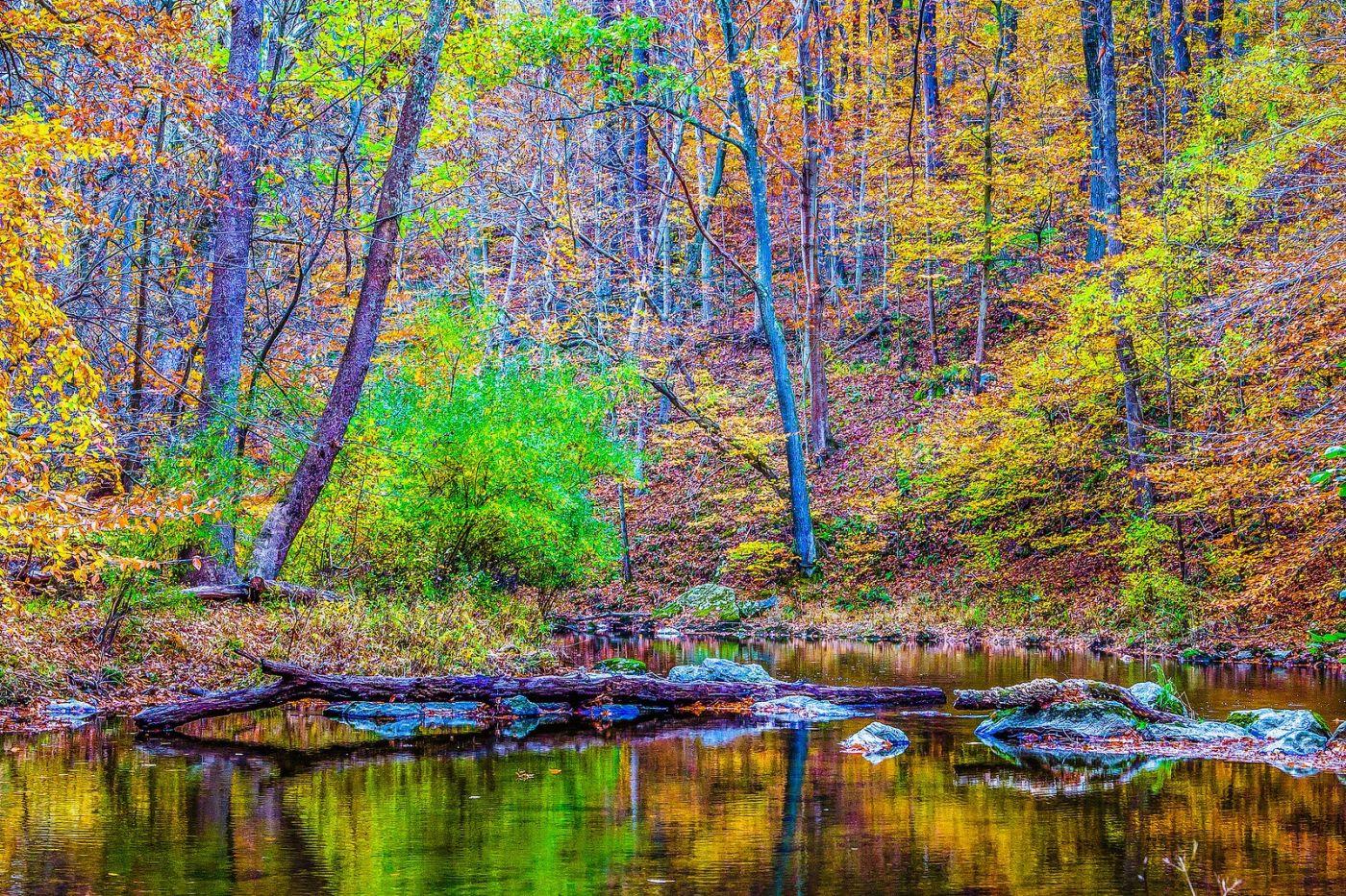 宾州雷德利克里克公园(Ridley creek park),大自然的舞台_图1-11