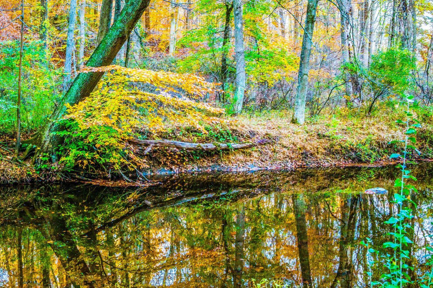 宾州雷德利克里克公园(Ridley creek park),大自然的舞台_图1-14