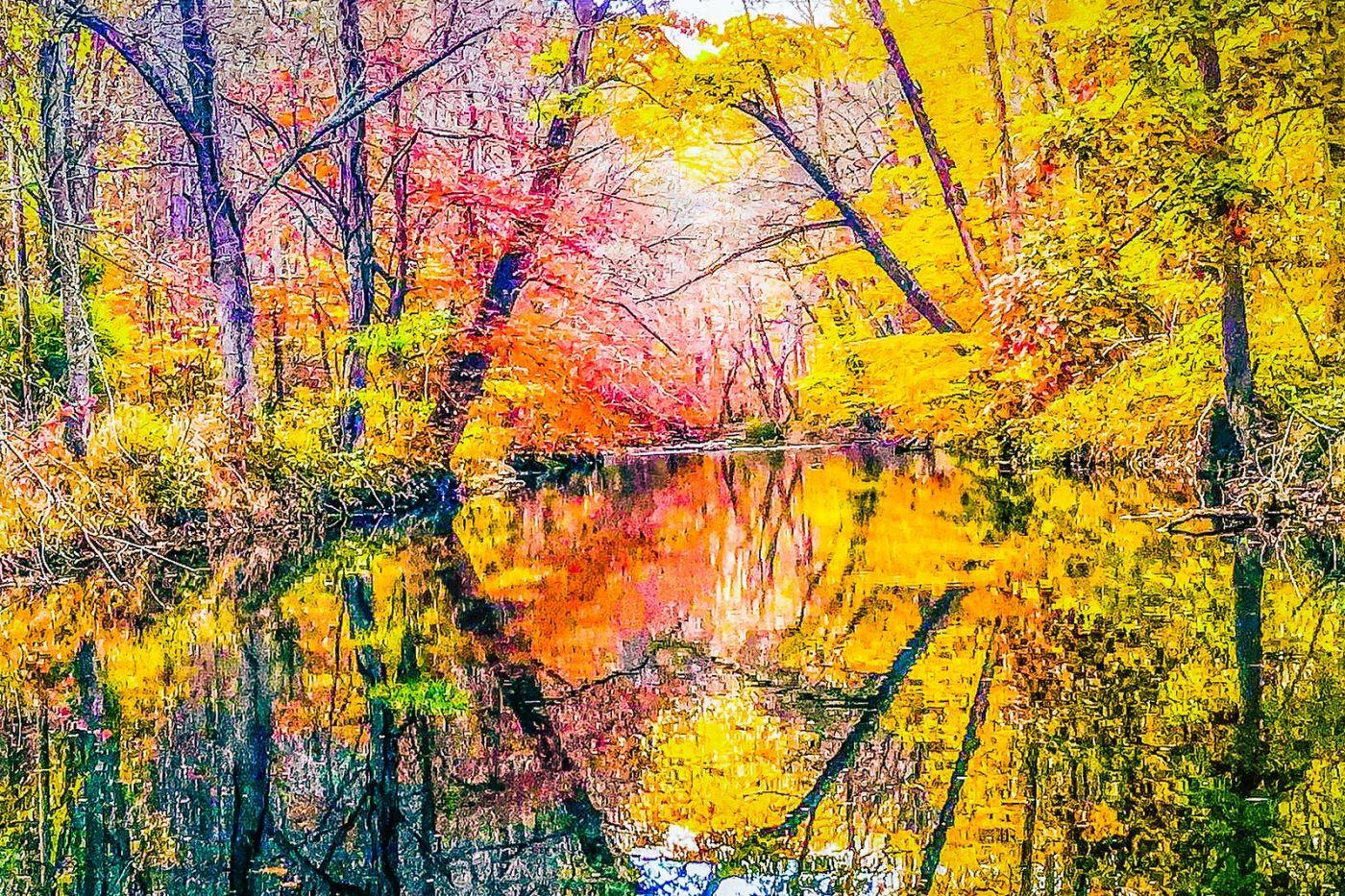 宾州雷德利克里克公园(Ridley creek park),大自然的舞台_图1-20