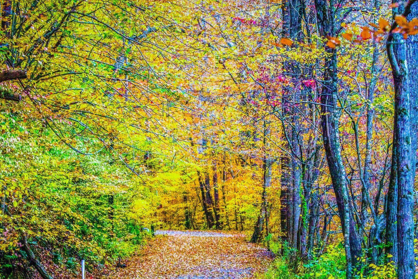 宾州雷德利克里克公园(Ridley creek park),大自然的舞台_图1-18