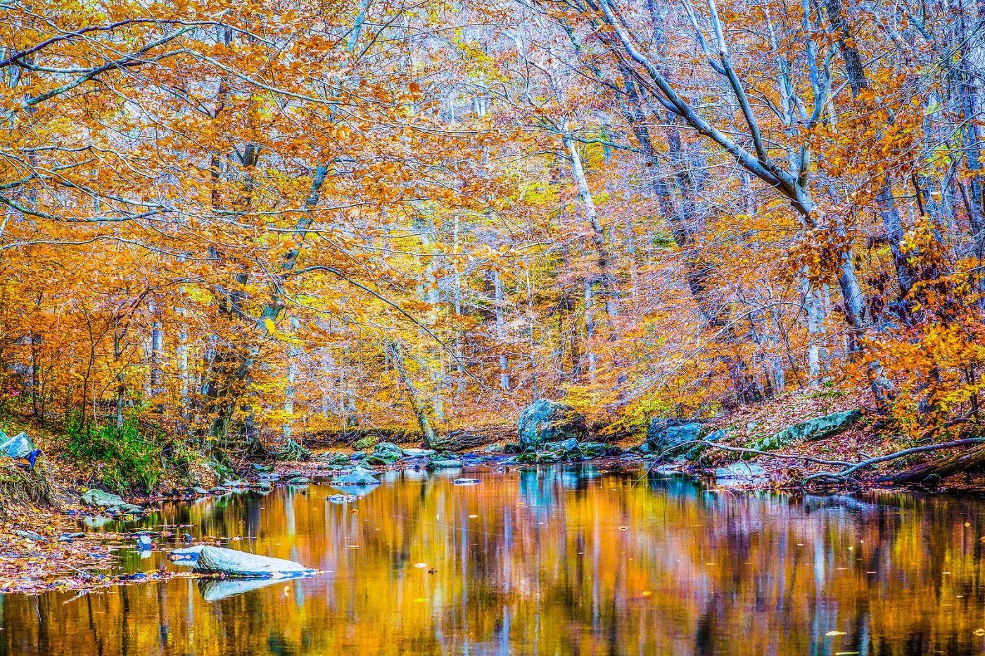宾州雷德利克里克公园(Ridley creek park),大自然的舞台_图1-17