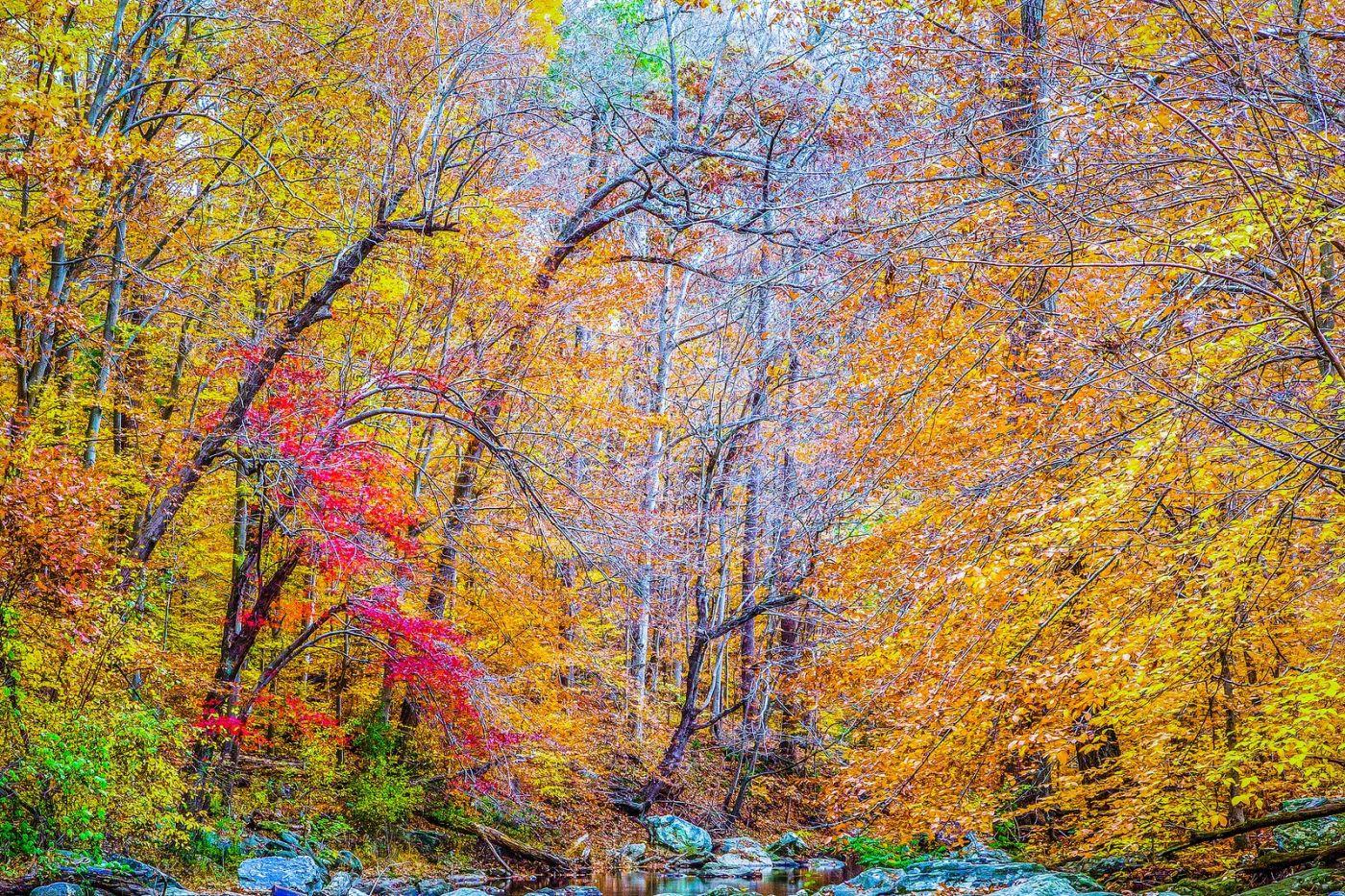 宾州雷德利克里克公园(Ridley creek park),大自然的舞台_图1-21