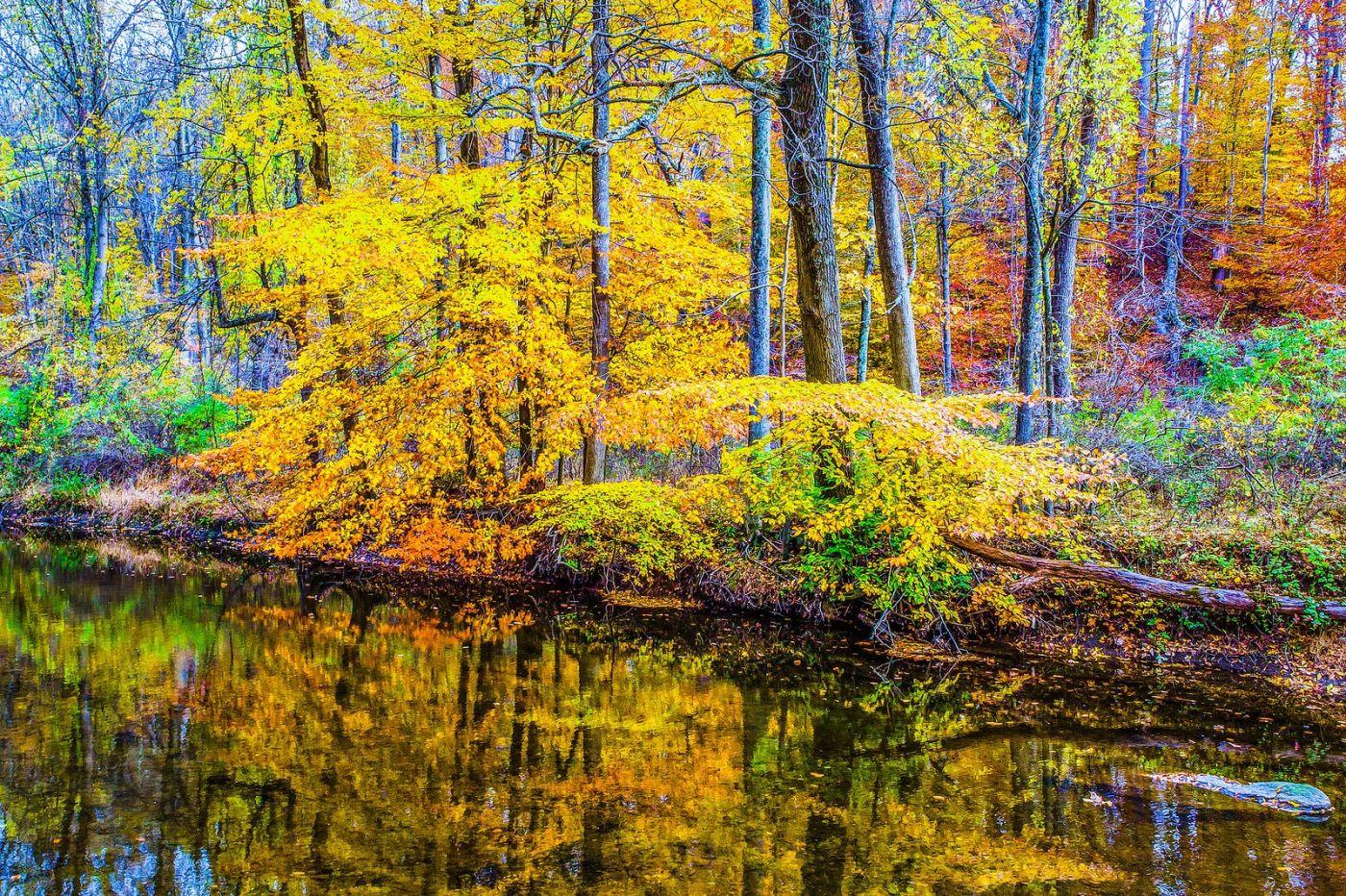 宾州雷德利克里克公园(Ridley creek park),大自然的舞台_图1-23