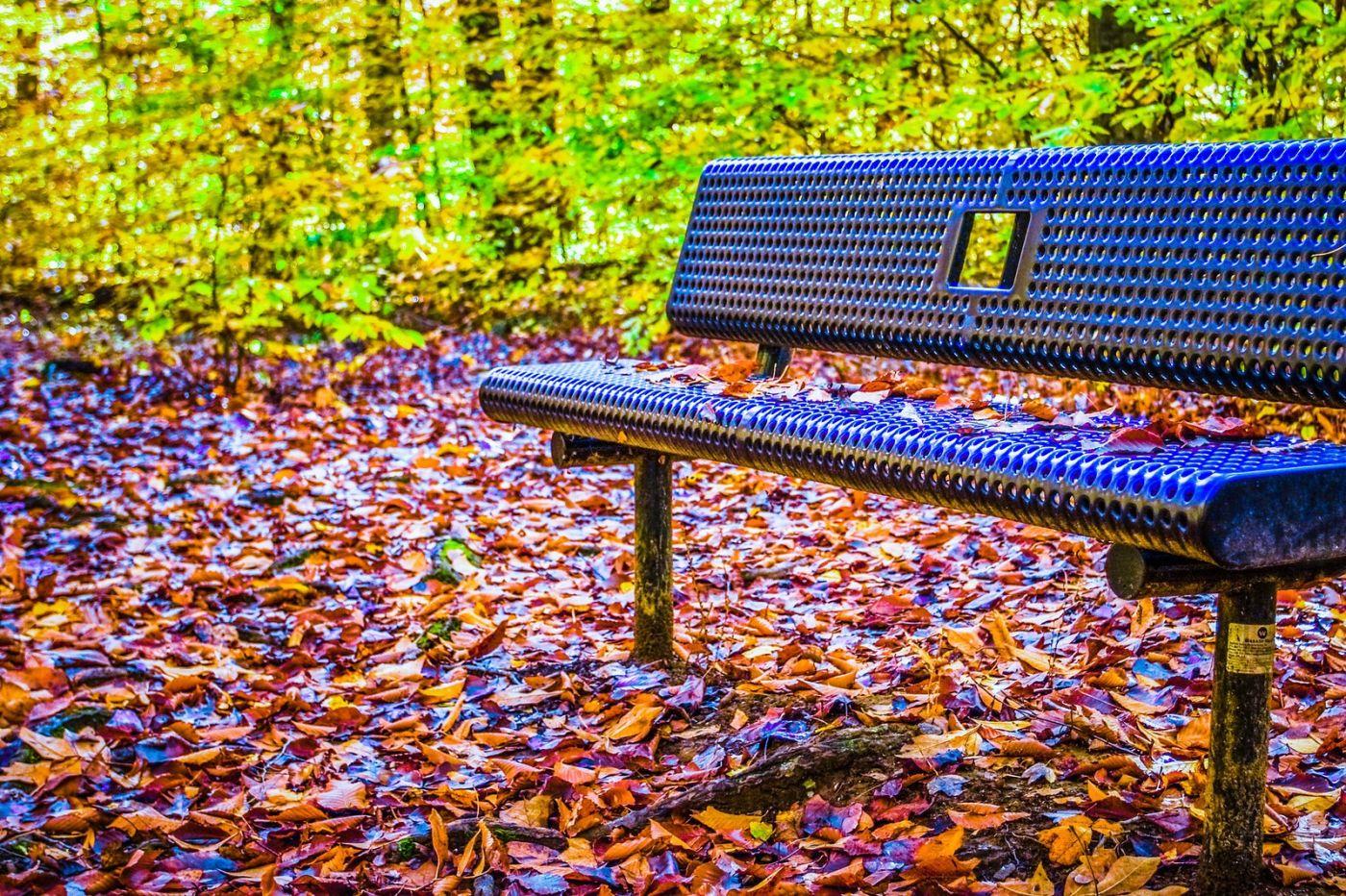 宾州雷德利克里克公园(Ridley creek park),大自然的舞台_图1-25