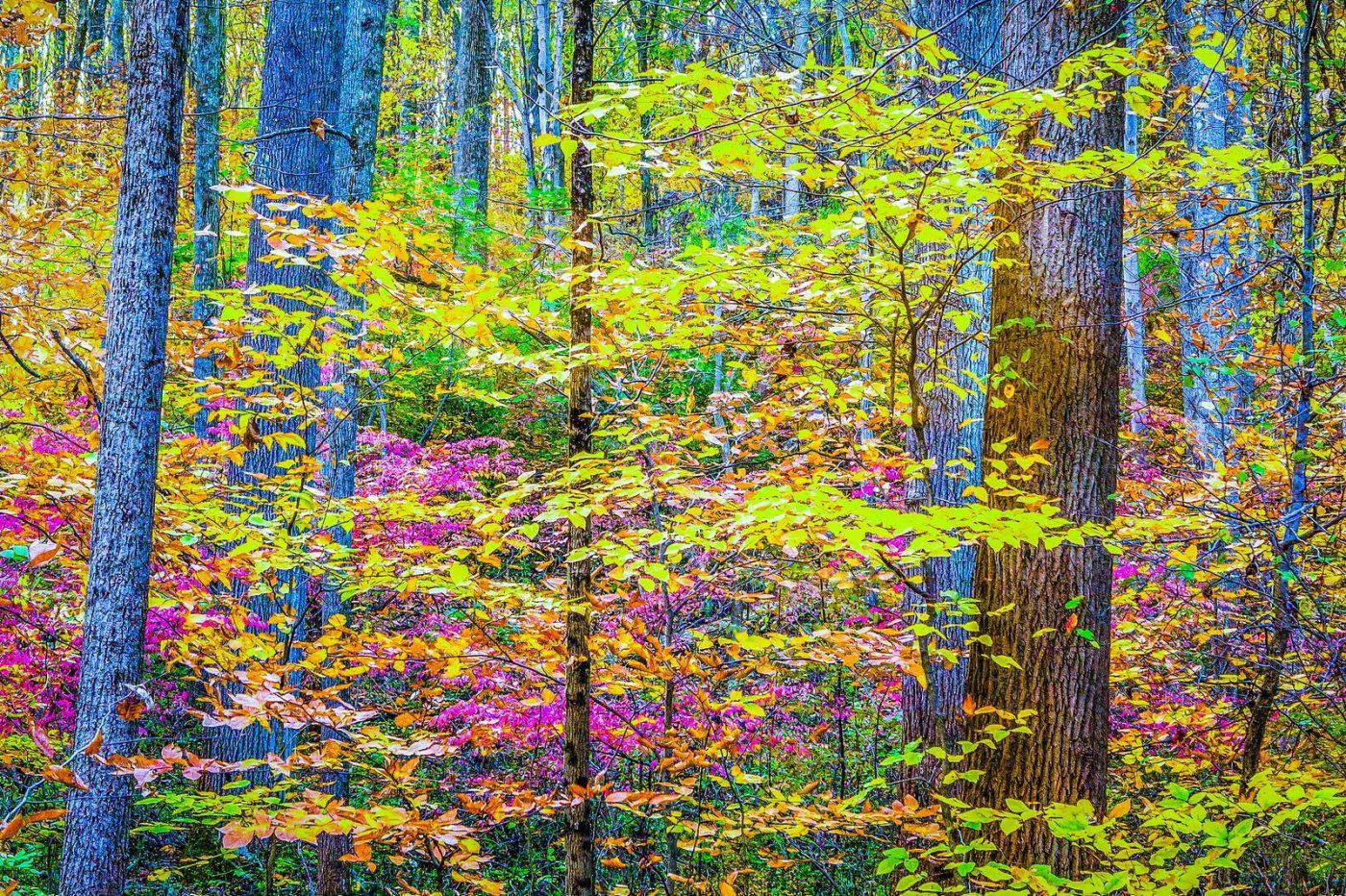 宾州雷德利克里克公园(Ridley creek park),大自然的舞台_图1-29