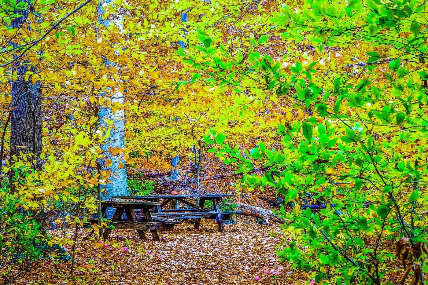 宾州雷德利克里克公园(Ridley creek park),大自然的舞台_图1-33