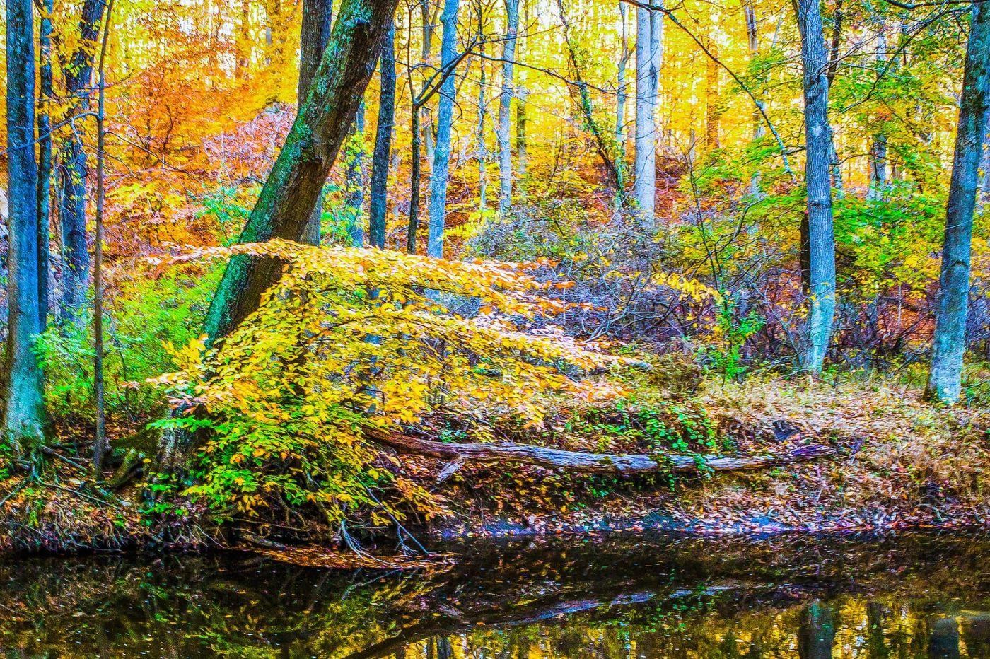 宾州雷德利克里克公园(Ridley creek park),大自然的舞台_图1-37