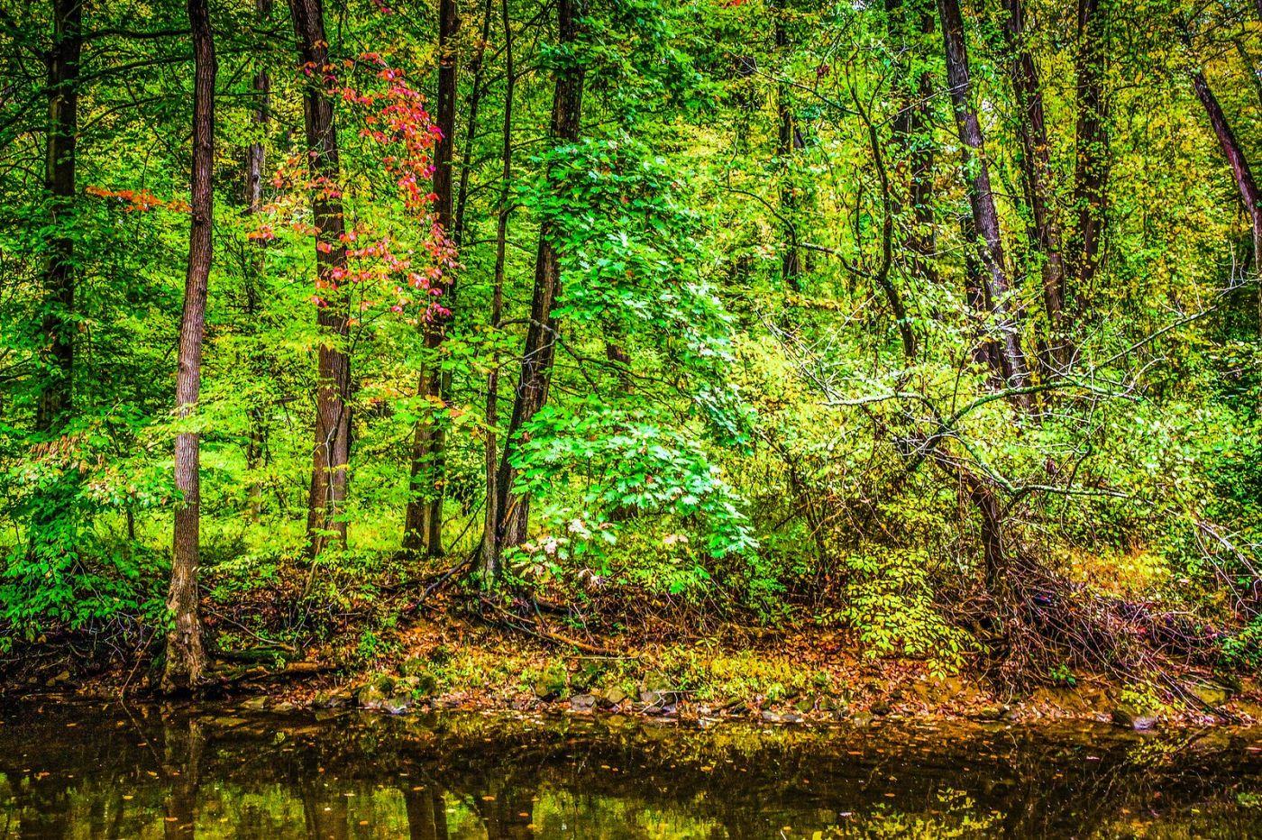 宾州雷德利克里克公园(Ridley creek park),大自然的舞台_图1-39