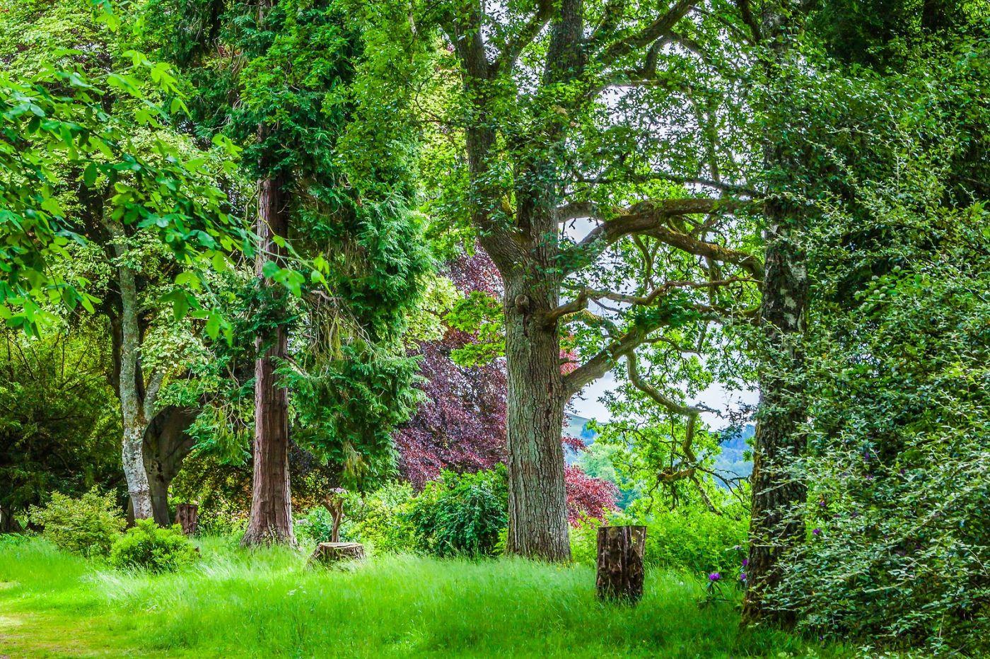 苏格兰布莱尔城堡(Blair Castle),环境优美_图1-37