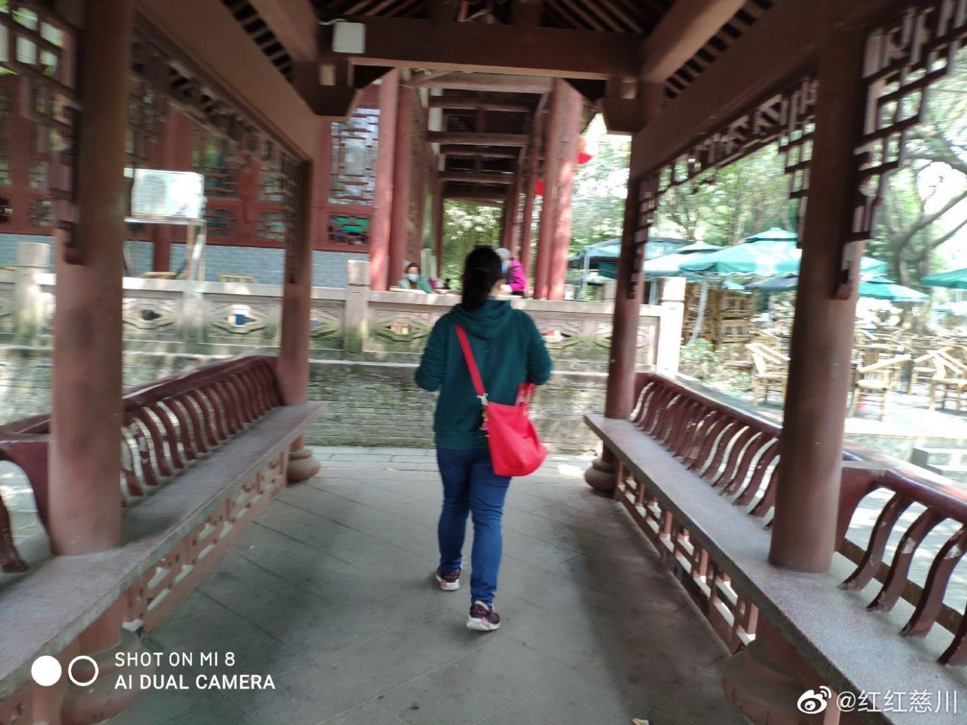 成都望江公园_图1-5