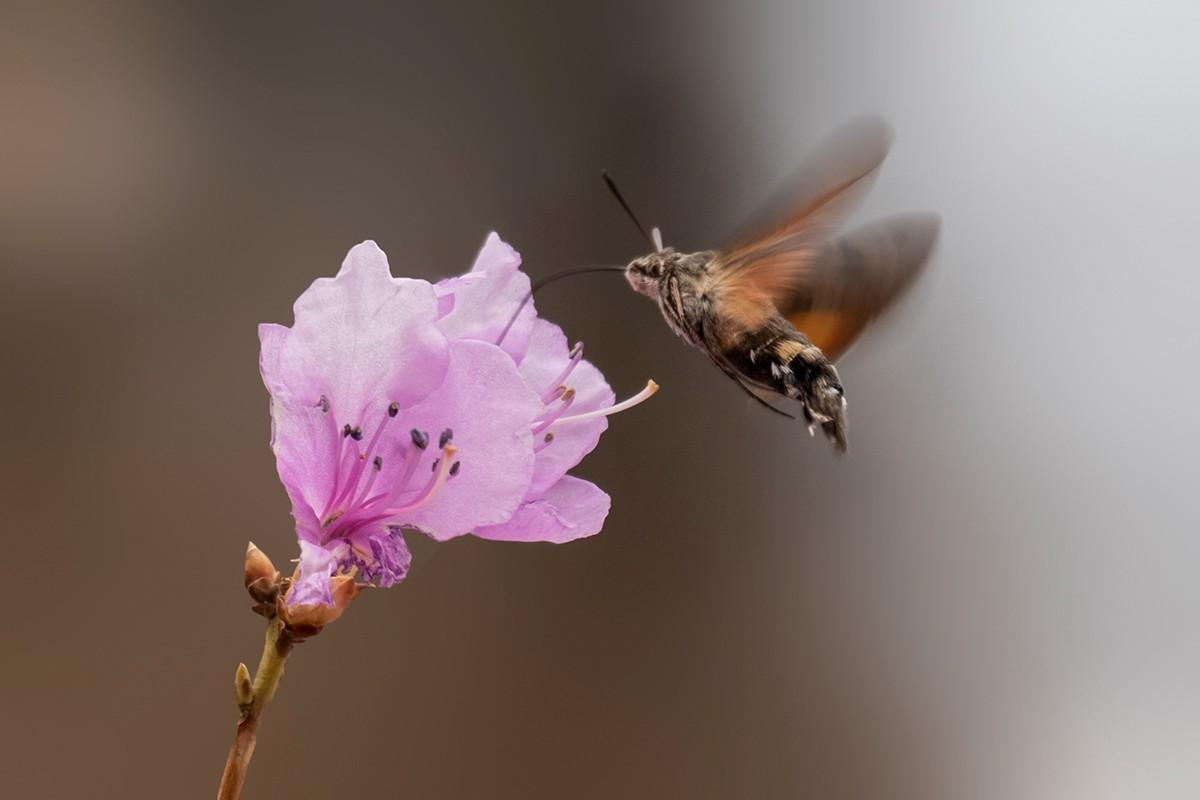 花与鸟_图1-6