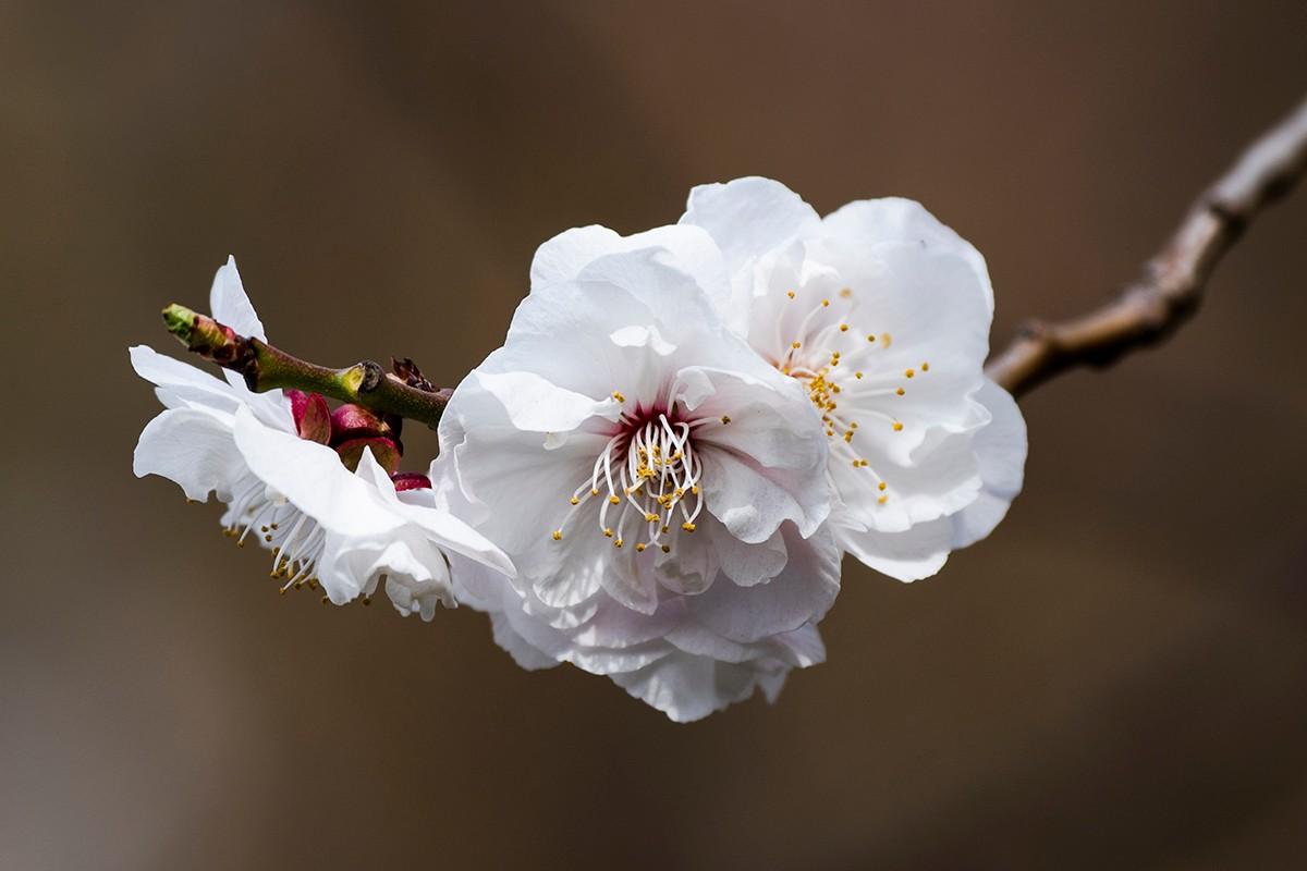 花与鸟_图1-8