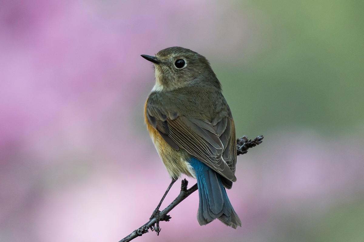 花与鸟_图1-1