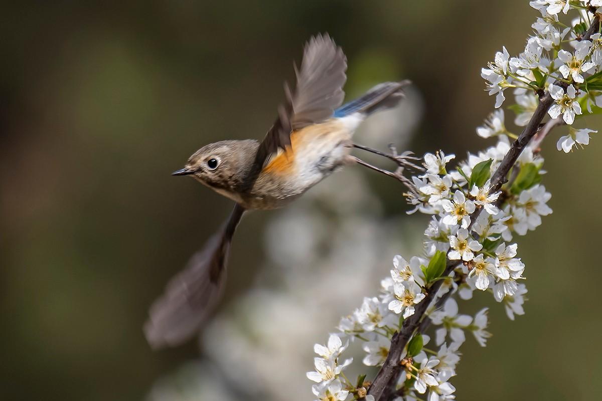 花与鸟_图1-2