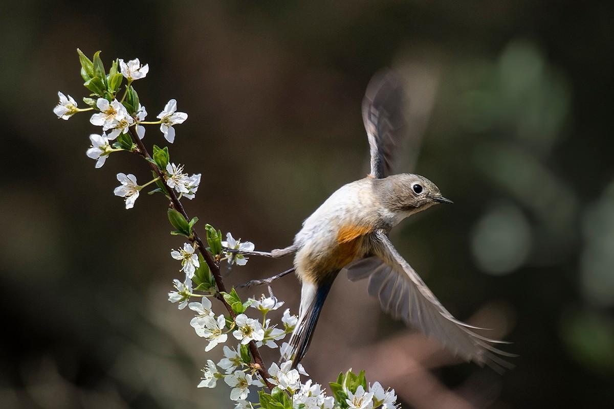 花与鸟_图1-3