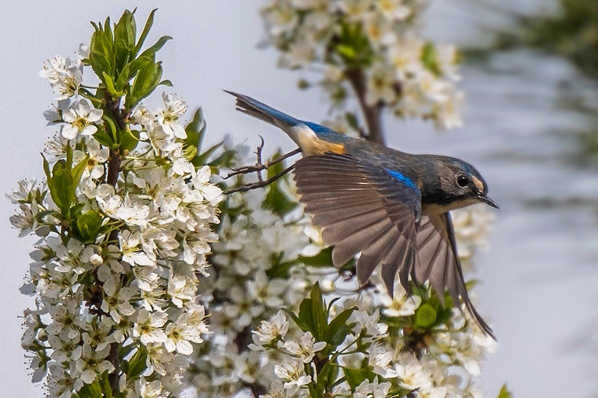 花与鸟_图1-4