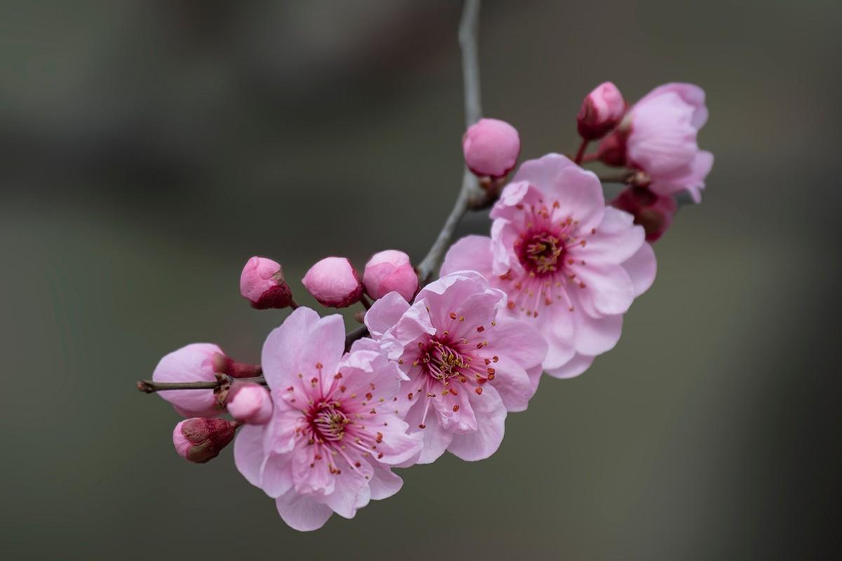 花与鸟_图1-7