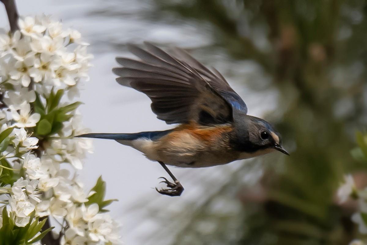 花与鸟_图1-5