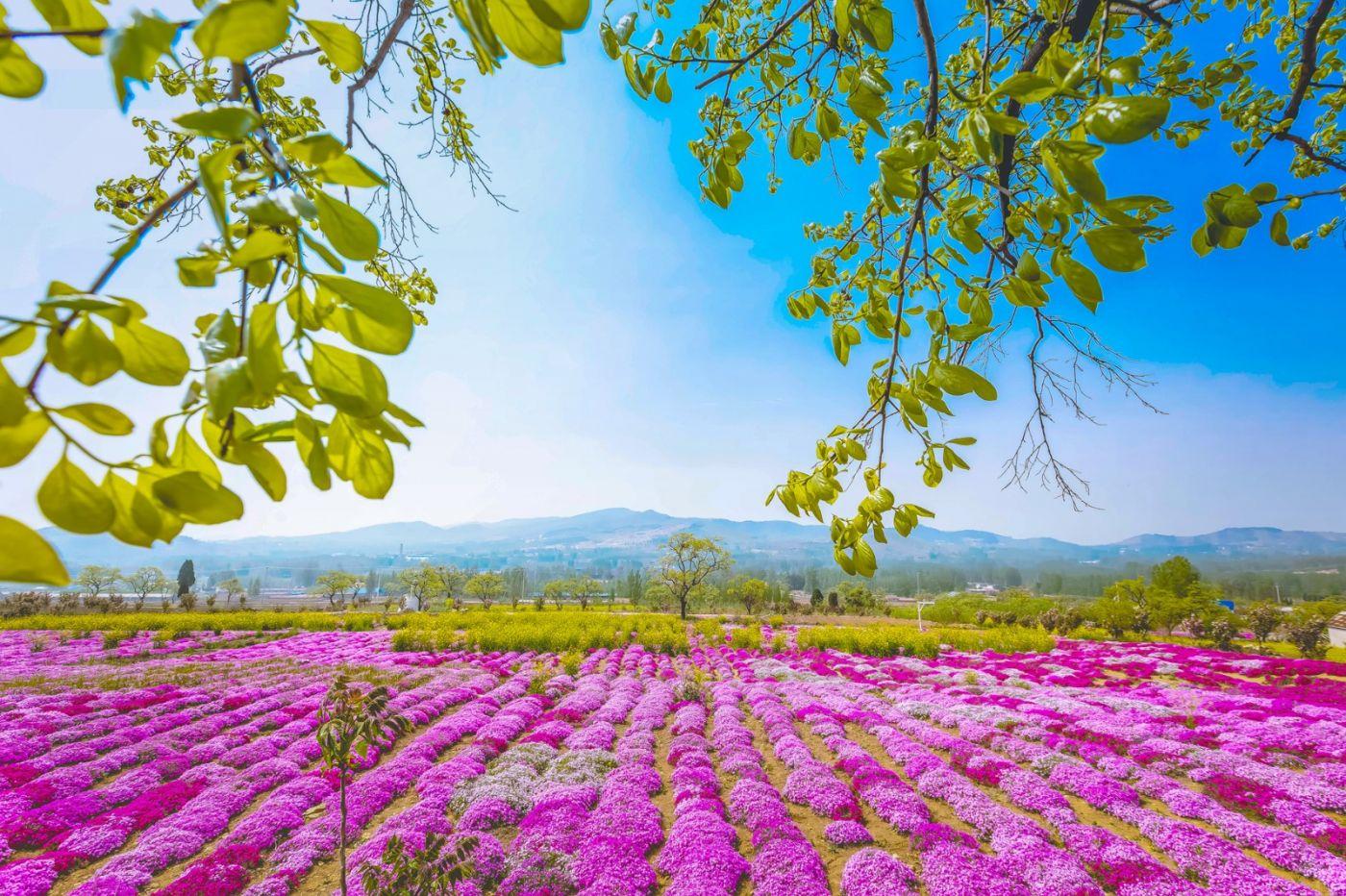 这个春天有点美 汉服仙子下凡尘 抓紧来临沂踏青赏花拍片片_图1-8