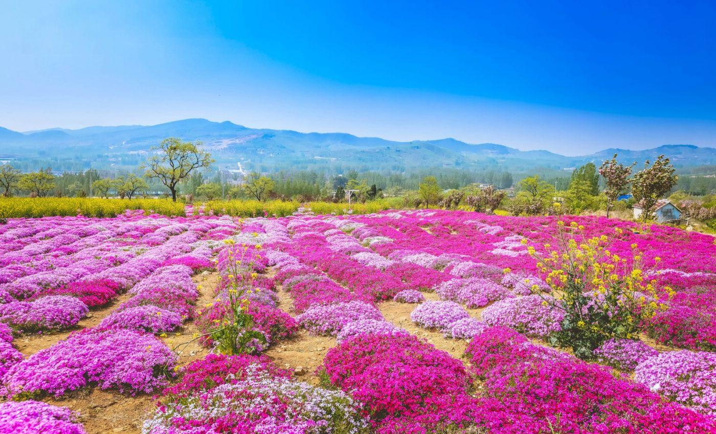 这个春天有点美 汉服仙子下凡尘 抓紧来临沂踏青赏花拍片片_图1-9