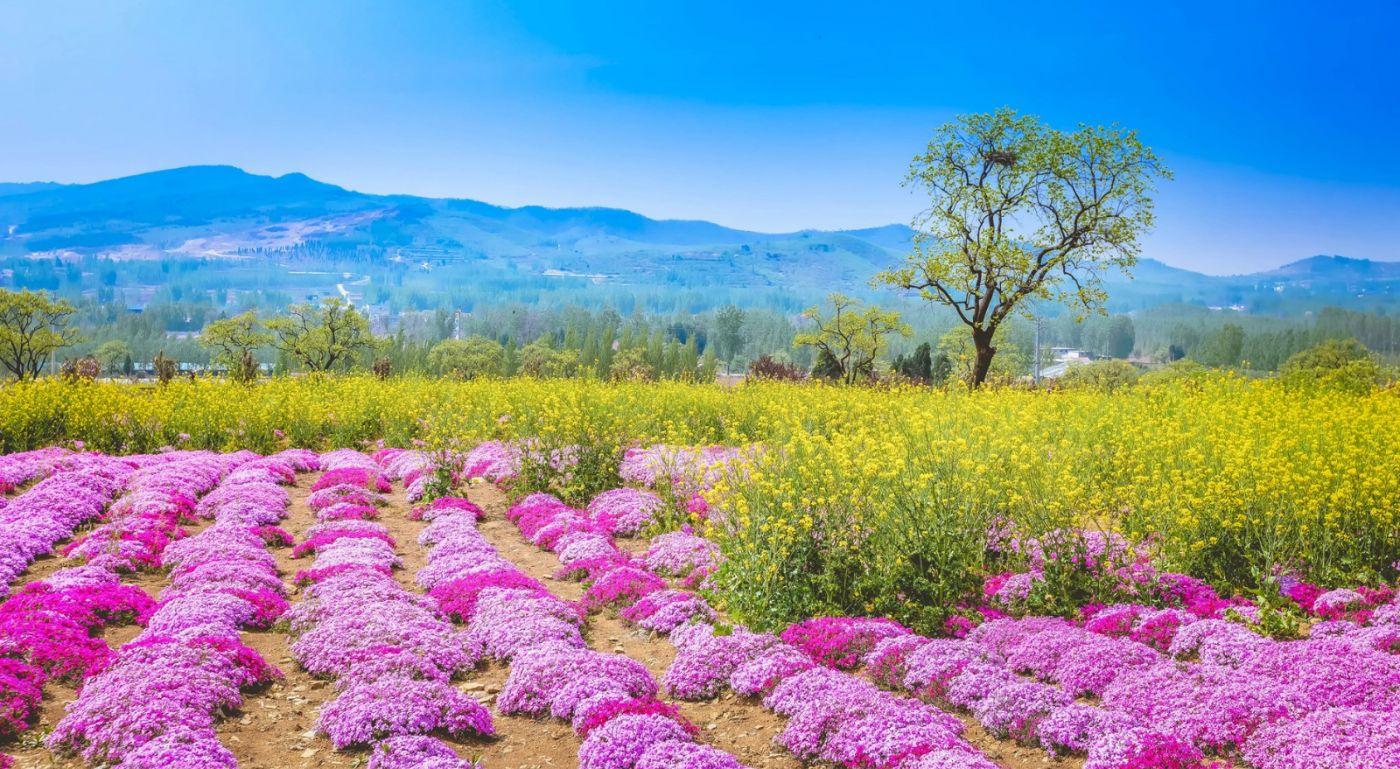 这个春天有点美 汉服仙子下凡尘 抓紧来临沂踏青赏花拍片片_图1-12