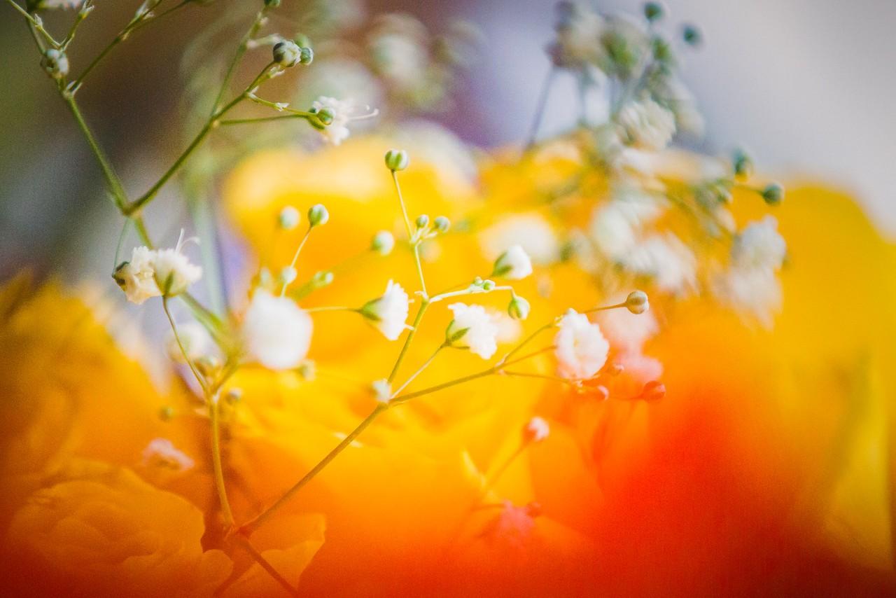 玫瑰花,母亲节最爱_图1-17