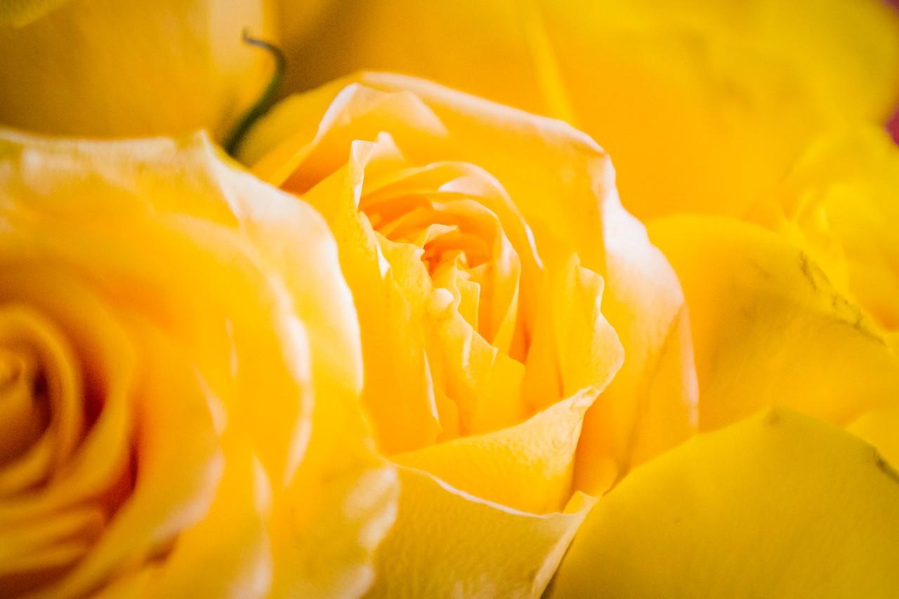 玫瑰花,母亲节最爱_图1-22