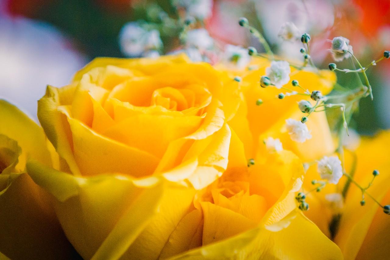 玫瑰花,母亲节最爱_图1-23