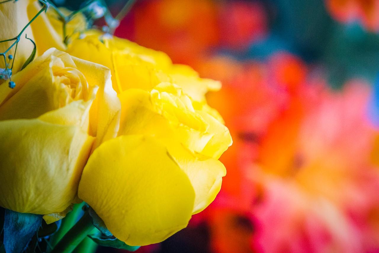玫瑰花,母亲节最爱_图1-25