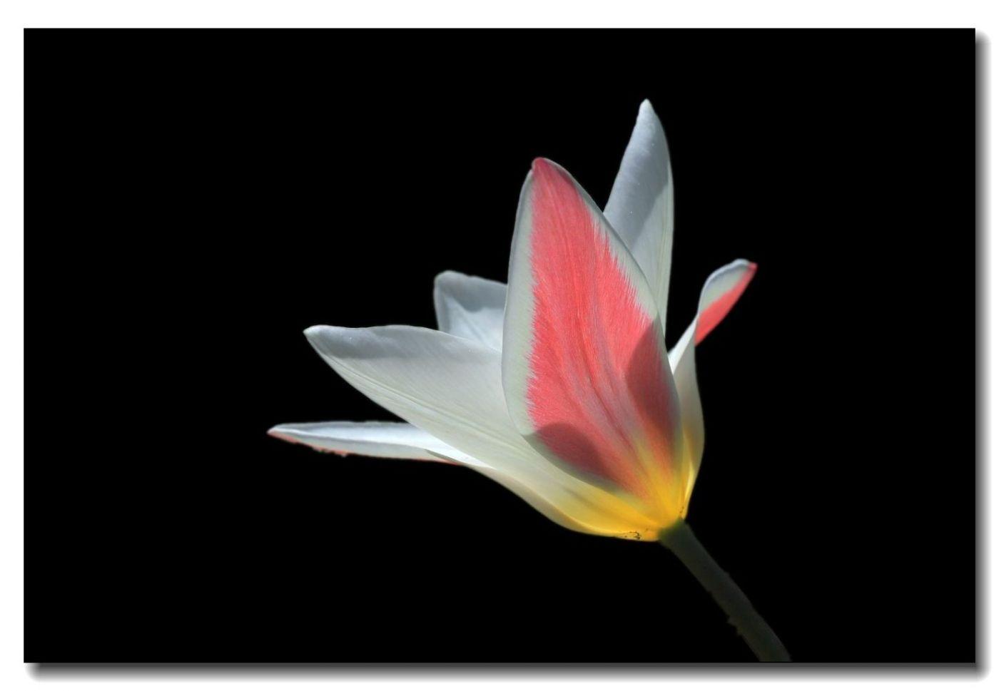 春花一组_图1-4