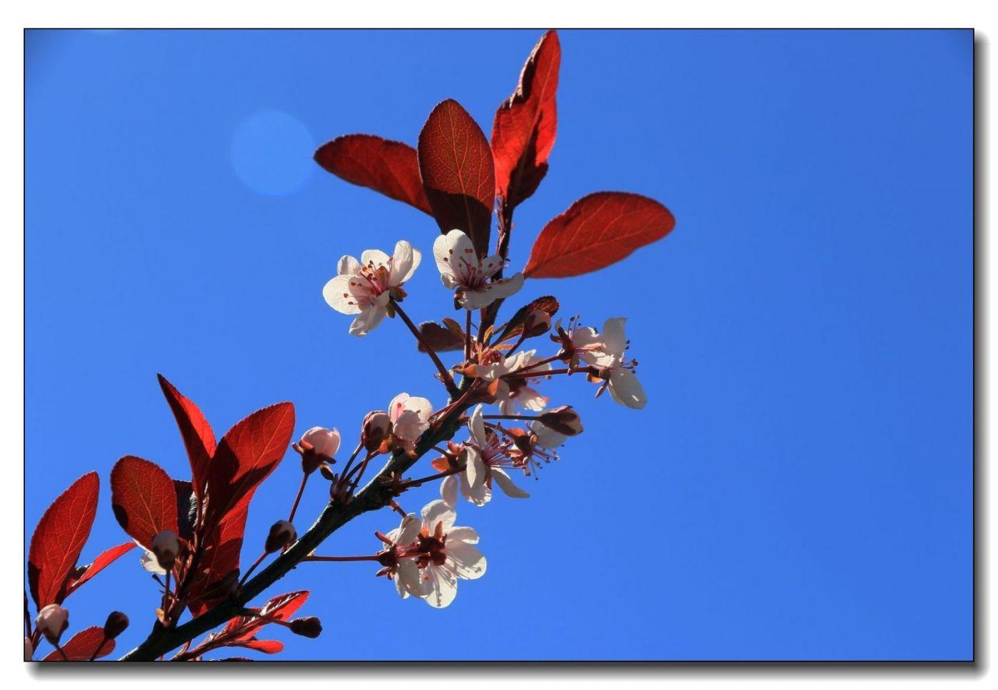 春花一组_图1-9