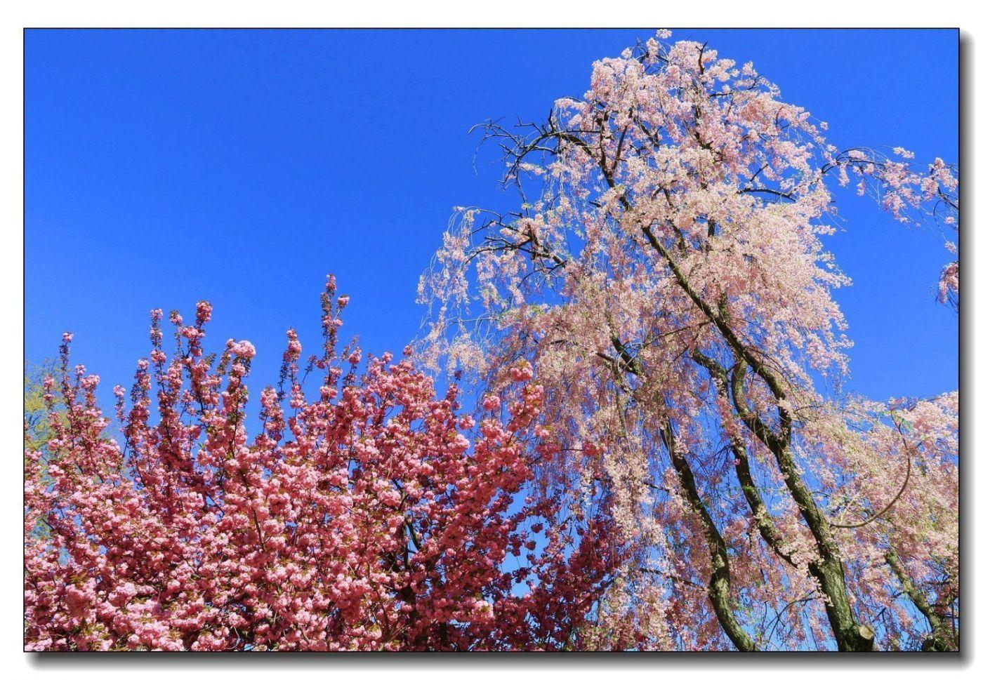 春花一组_图1-19