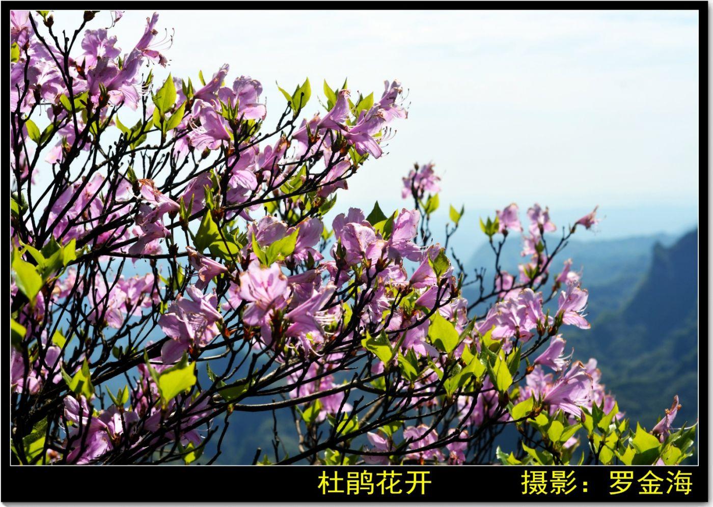 金仙寺游记·七律(上)_图1-26